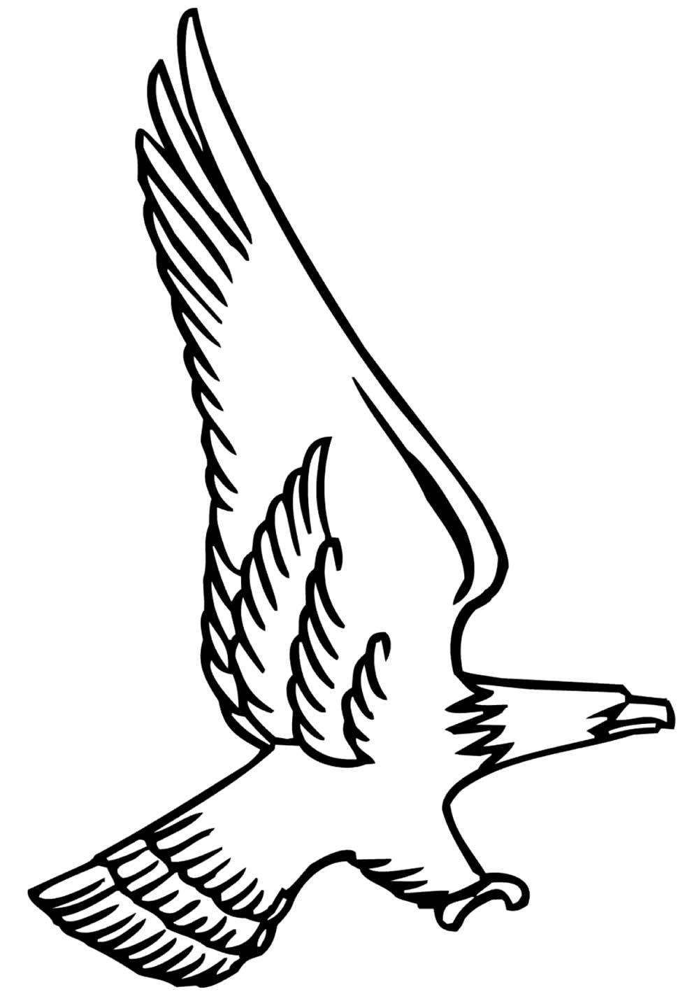 Moldes de Águia para imprimir