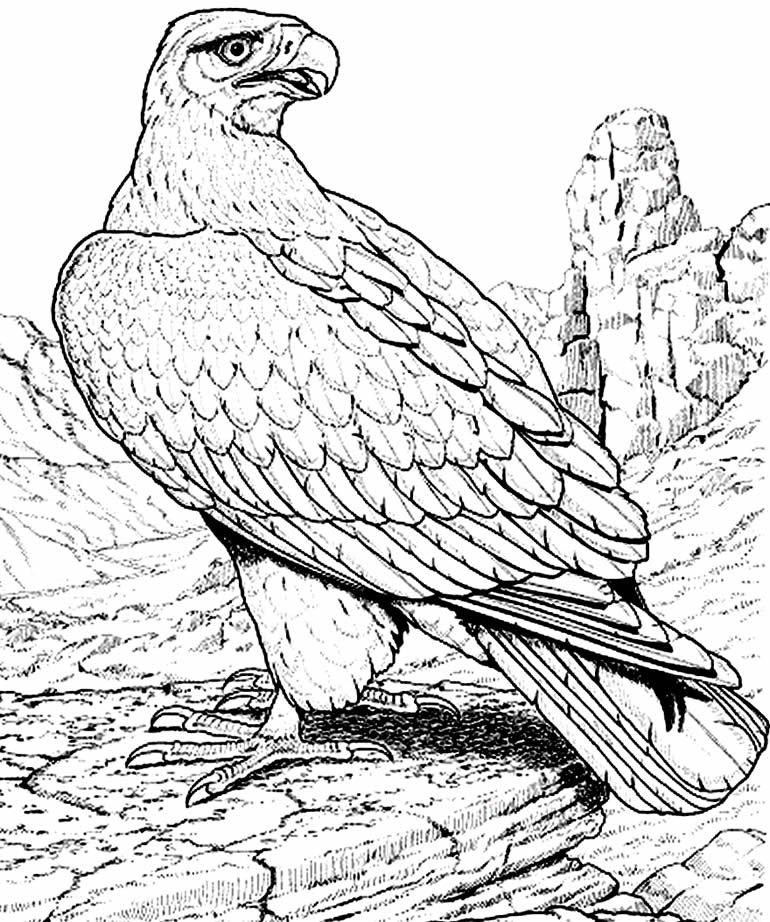 Imagem de Águia para pintar