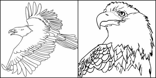 Desenhos de Águia para imprimir e colorir