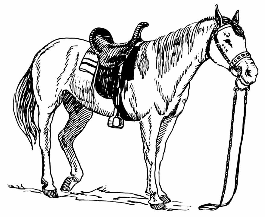 Molde para pintar de cavalo
