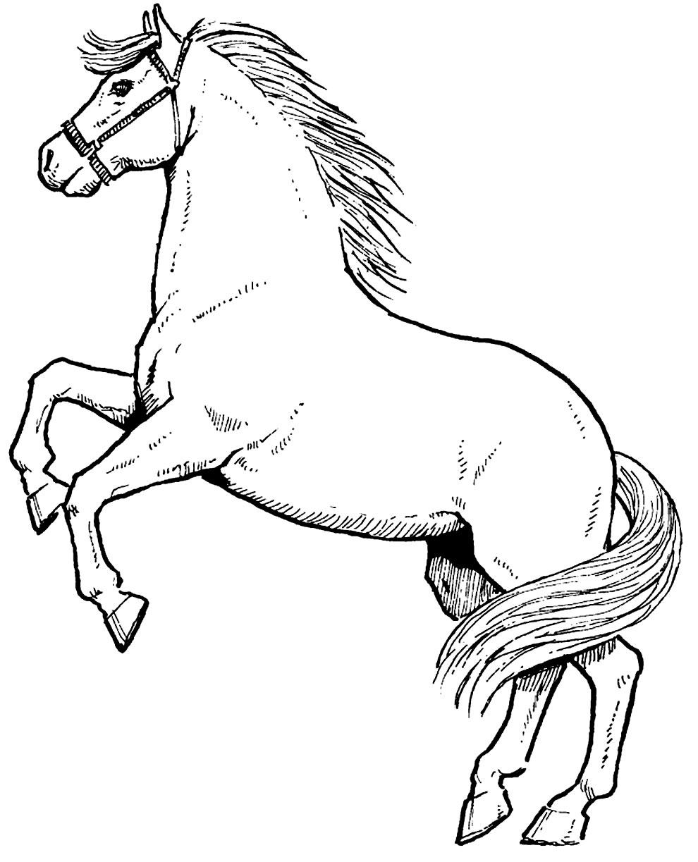 Desenho de Cavalo para imprimir e colorir