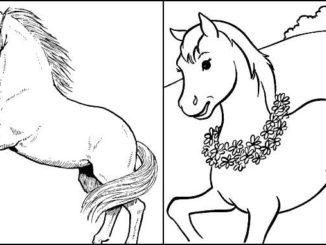 Desenhos de Cavalos para imprimir e colorir