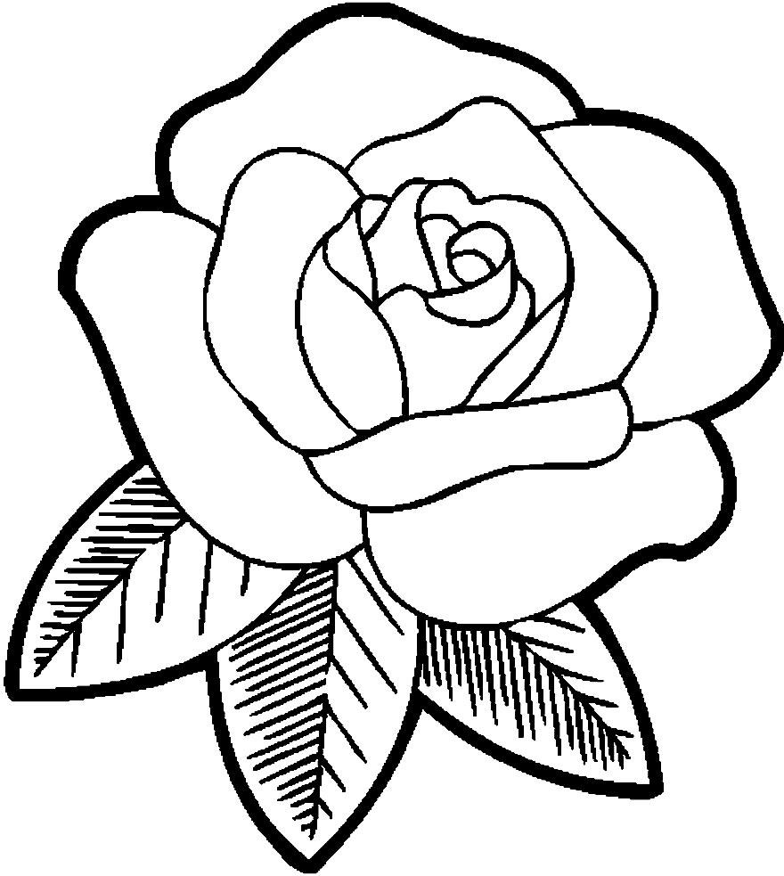 Rosa para imprimir e colorir