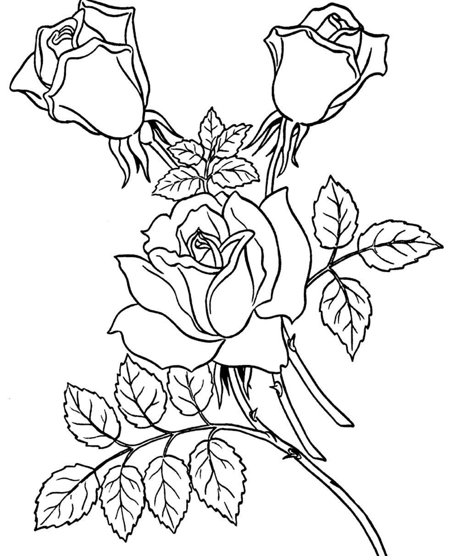 Desenho de Rosar para pintar