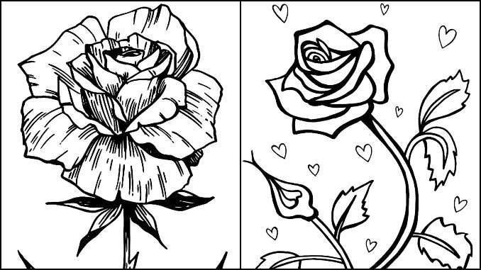 Desenhos de Rosa para colorir