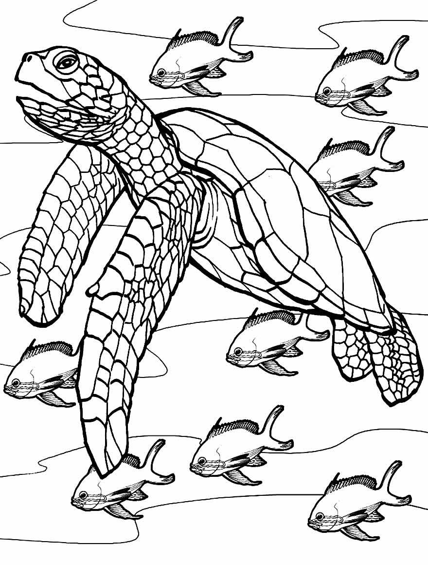 Imagem de Tartaruga para colorir