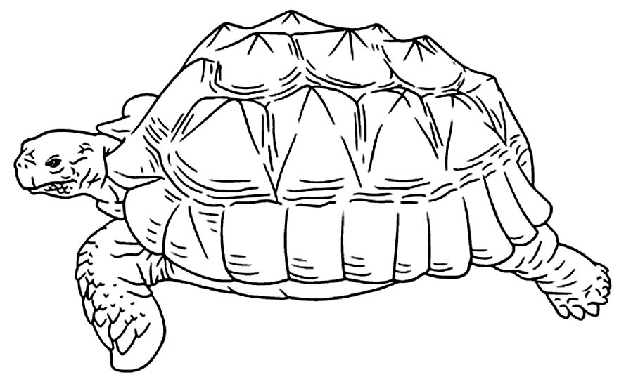Desenho para pintar de Tartaruga