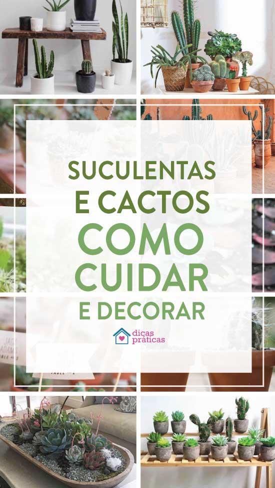 Suculentas e Cactos: Como cuidar e dicas de decoração