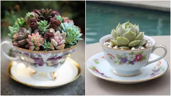Suculentas em copos e xícaras: 20 ideias lindas