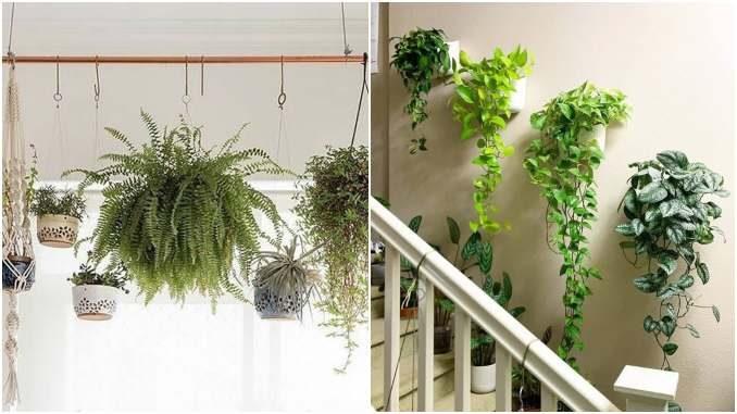 Decoração para casa com plantas penduradas