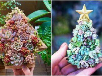 Decoração com Árvore de Natal de suculentas